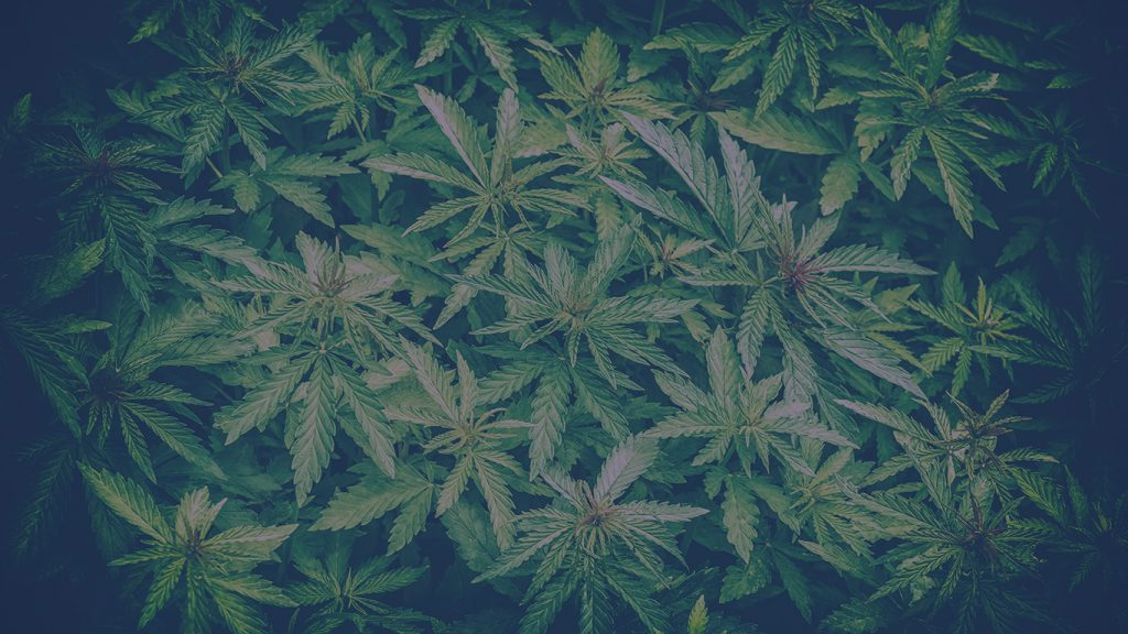 A Cannabis Conversation - Preparing Your Business